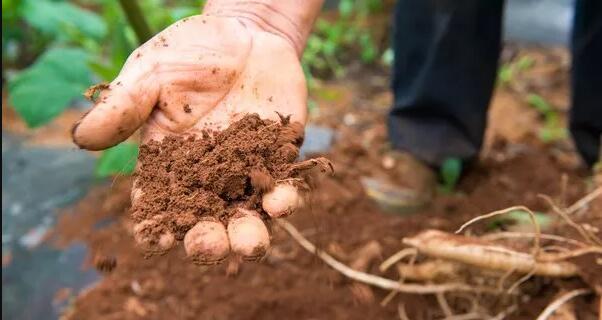 土壤EC值